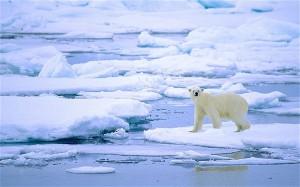 polarbear_1969371b